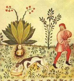 mandrake ritual2